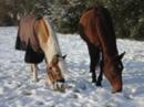 Nette Stallgemeinschaft bei Bad Kreuznach hat Pferdeboxen zu vermieten