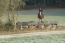 Zuverlässiges Springpferd Vielseitigkeitspferd Fuchsstute