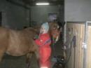 Quarterhorse Hengst sucht guten Platz