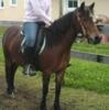Liebe Brave 5 Jährige Pony Stute