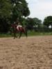 Bildhübscher Traberwallach als Freizeitpferd