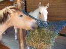 Altersruhesitz für Ihr Pferd !
