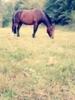 Lieber Pony Wallach sucht neuen Besitzer