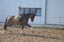 Dressurpferd mit überdurchschnittlichen GGA