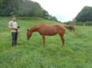 Tolle 2 jährige Quarter Horse Nachwuchsstute