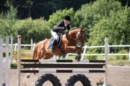 Goldy-one of swedens best eventing ponies!
