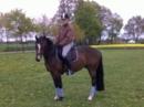 Schickes Pony auf das man sich verlassen kann! Kinderpony