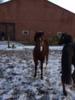 Schickes ausdrucksstarkes braves Pony