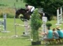 7-jährige Stute top Amateurpferd