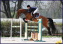 Talented showjumping mare with top pedigree !