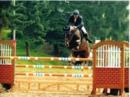 Qualitätsvolles Springpferd mit Top Einstellung M Springen gewonnen