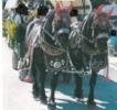 Bildschönes Percheron Passgespann Rappen