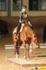 Qualitätvolle Quarter Horse Stute mit guter Abstammung zu verkaufen