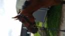 Junges Pferd mit viel Vermögen!