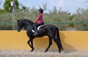 Purebred, Spanish, (P.R.E)