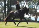 Excellent Pure Cartujano black stallion
